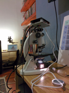picroscopy mikroskop